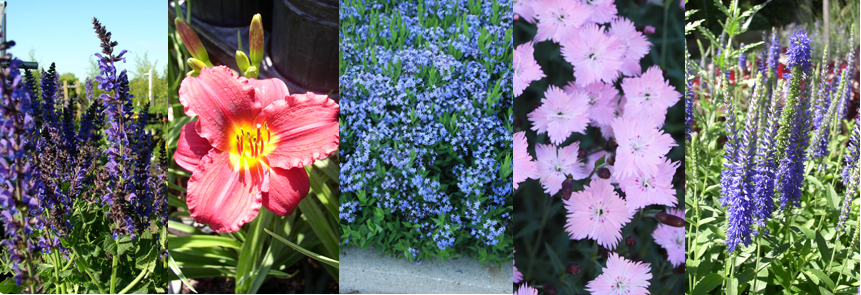 The value of perennials in the garden hawks landscape inc flowering perennials are plants that die back to or near the ground each winter but come back each year one of the main features of flowering perennials mightylinksfo